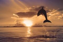 """Фотошпалери """"Дельфін"""" (#70019)"""