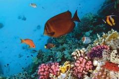 """Фотошпалери """"Підводний світ"""" (#70020)"""