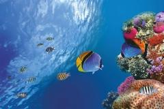 """Фотошпалери """"Підводний світ"""" (#70021)"""