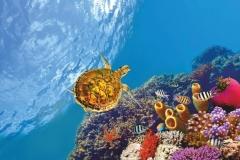 """Фотошпалери """"Підводний світ"""" (#70022)"""