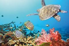 """Фотошпалери """"Морська черепаха"""" (#70023)"""
