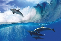 """Фотошпалери """"Дельфіни"""" (#70025)"""