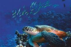 """Фотошпалери """"Морська черепаха"""" (#70027)"""