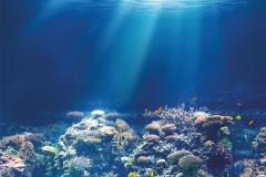 """Фотошпалери """"Підводний світ"""" (#70030)"""