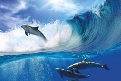 """Фотошпалери """"Дельфіни"""" (#70031)"""