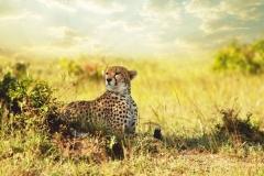 """Фотошпалери """"Леопард"""" (#70032)"""