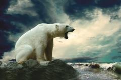 """Фотошпалери """"Білий ведмідь"""" (#70033)"""