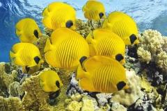 """Фотошпалери """"Морські рибки"""" (#70040)"""