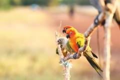 """Фотошпалери """"Папуги"""" (#70042)"""
