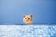 """Фотошпалери """"Кішка"""" (#70043)"""