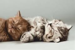 """Фотошпалери """"Кошенята"""" (#70044)"""