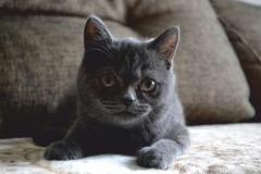 """Фотошпалери """"Кіт"""" (#70045)"""