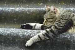 """Фотошпалери """"Кішка"""" (#70049)"""