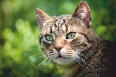 """Фотошпалери """"Кіт"""" (#70051)"""