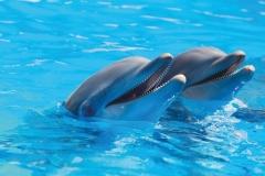 """Фотошпалери """"Дельфіни"""" (#70053)"""