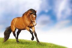"""Фотошпалери """"Кінь"""" (#70056)"""