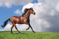 """Фотошпалери """"Кінь"""" (#70057)"""