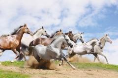 "Фотошпалери ""Табун диких коней"" (#70058)"