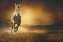 """Фотошпалери """"Кінь"""" (#70060)"""