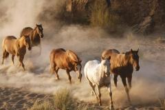 "Фотошпалери ""Табун диких коней"" (#70061)"