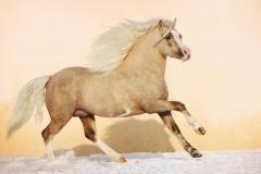 """Фотошпалери """"Кінь"""" (#70062)"""