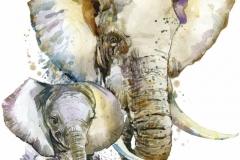 """Фотошпалери """"Слони"""" (#80004)"""